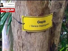 Pkok 'Gombak' jaga alam sekitar